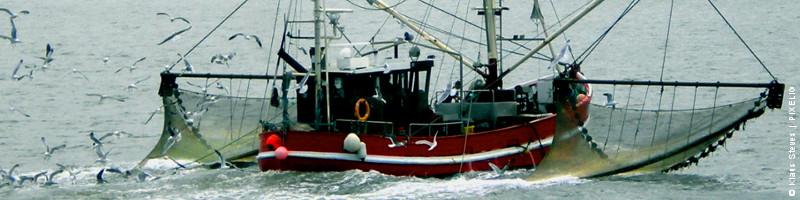 Banner Auftrag: Fischkutter auf Fang